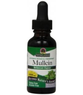 Mullein Leaf (Βερμπάσκο) 30ml