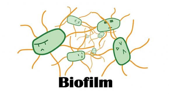 Biofilm και πώς επηρεάζει την λειτουργία του εντέρου και όχι μόνο