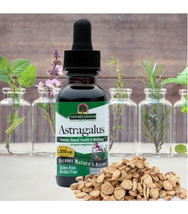 Astragalus Root - 30ml