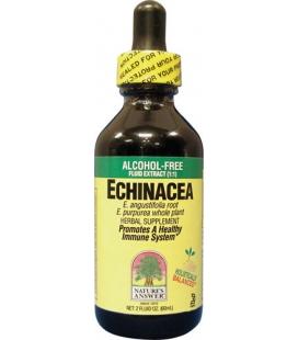 Echinacea - 60ml