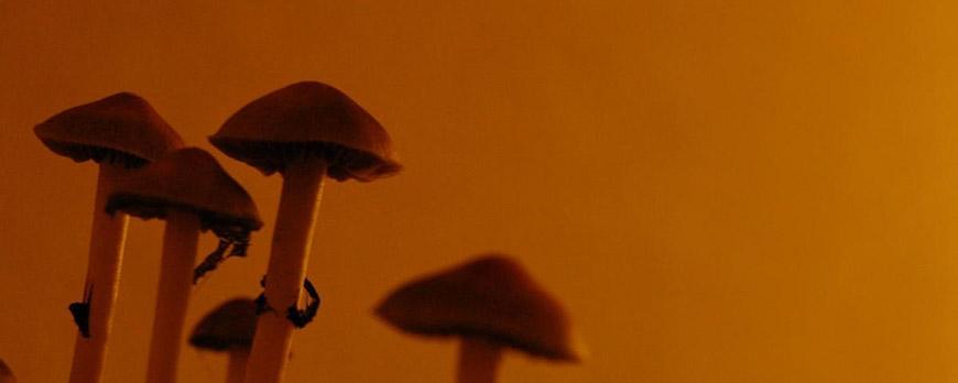 Τα ευεργετικά αποτελέσματα των φαρμακευτικών μανιταριών Mycelium
